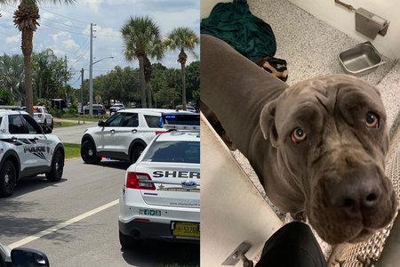 Niño de 11 años que llamó al 911 en desgarradora súplica para que le ayudaran a morir a tiros después de una disputa de perros con un vecino