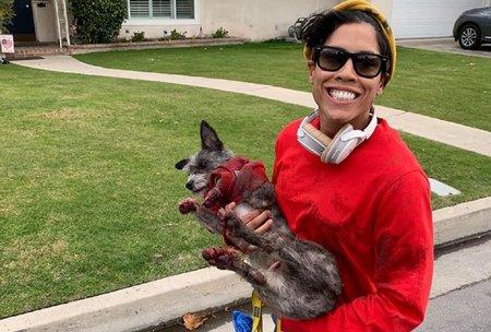 'Možete vidjeti da su mu šape potpuno krvave': Žena optužena da vuče psa za svojim električnim skuterom