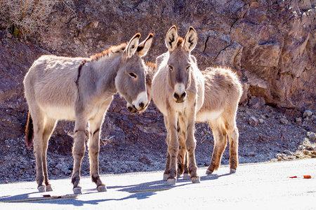 הרשויות מחפשות רוצח חמור בר 'פראי' שמטיל אימה במדבר מוג'בה