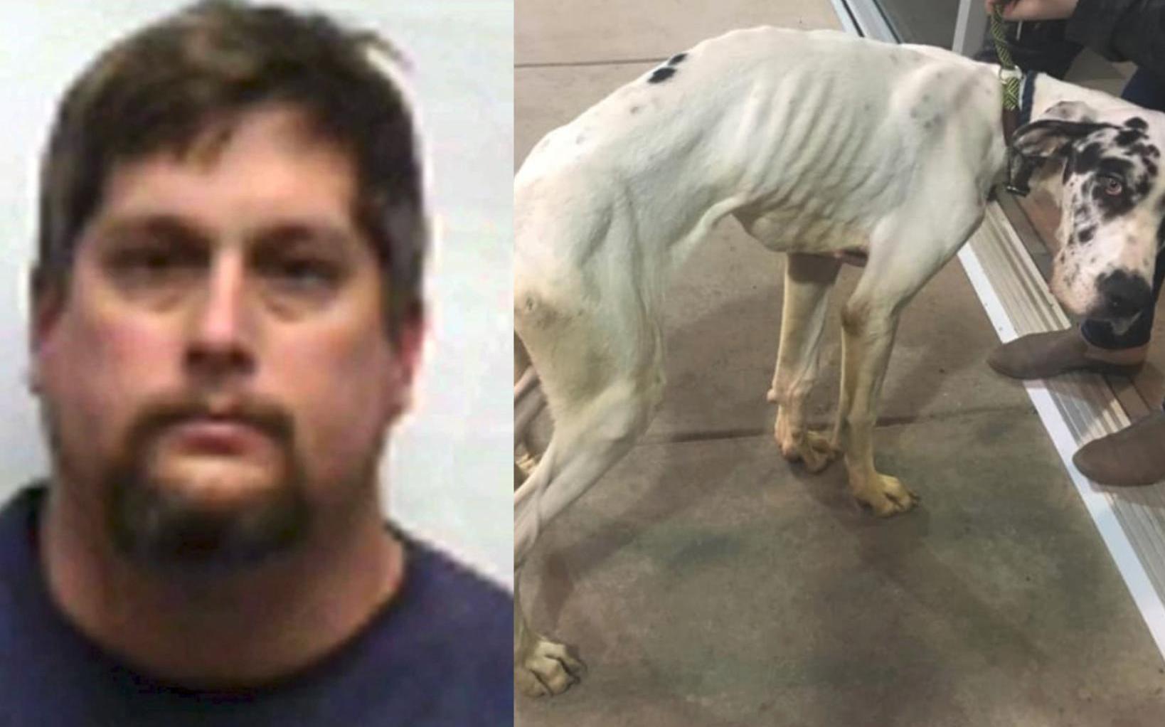 Adiestrador de perros se suicida después de ser acusado de abusar de los animales que cuidaba
