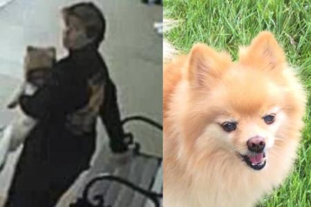 Dua Wanita Dugaan Mencuri Anjing Servis Dari Veteran, Yang Meninggal Berjam-jam Sebelum Sahabatnya diselamatkan